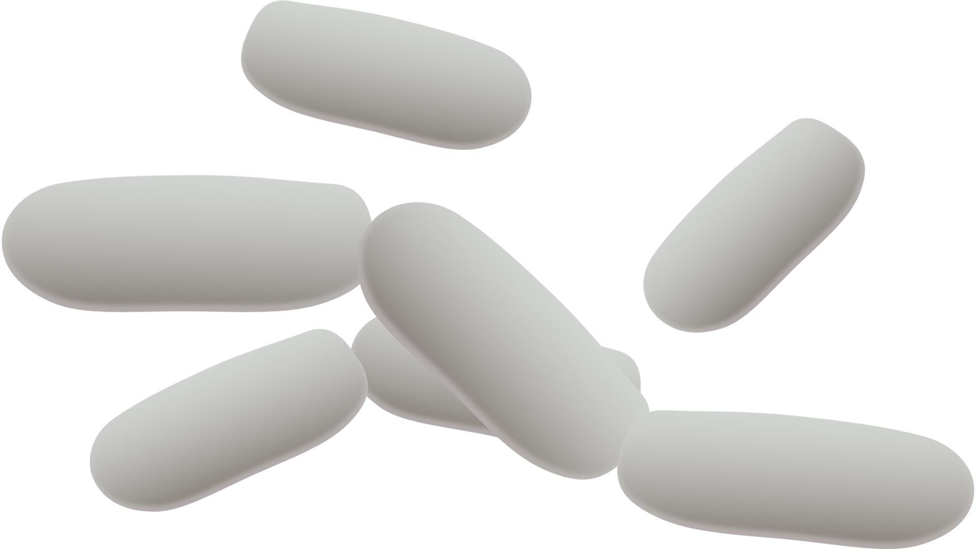Probiotika bei Sportlern