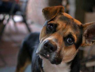 Ein Hund hilft dabei, gesund zu bleiben