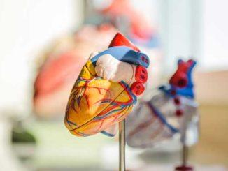 Myokarditis und Herzmuskelentzündung